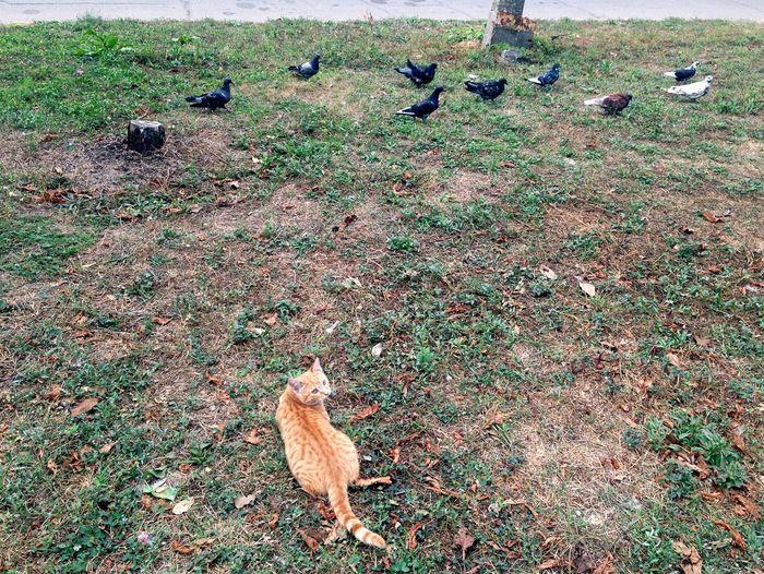 Homeless Cats Cat♡ Cat Cats Pigeon Pigeons Cats 🐱 Cat Lovers Cats Of EyeEm кот Коты Котик котэ