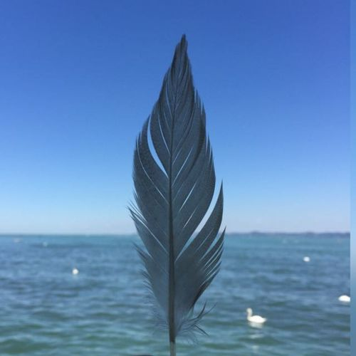 A Feather. In the back there is the lake of constance (in austria) Sea Horizon Over Water Blue Water Clear Sky Sky Nature No People Beauty In Nature Day EyeEmNewHere