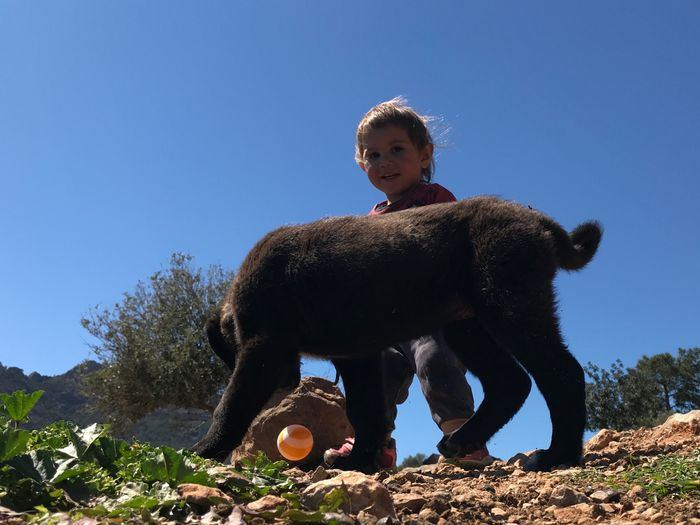 dog child and play Sky Clear Sky Nature Child Plant One Person Sunlight Blue Childhood Boys Day Tree Mammal Low Angle View Land Looking Males  Leisure Activity Outdoors Innocence