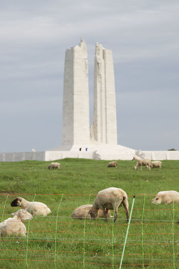 Animal Themes Animals In The Wild Architecture Building Exterior Built Structure Canada Domestic Animals Fence Field Grass Grassy Grazing Green Color Landscape Livestock Mammal Monument Pasture Remembrance Sacred Sheep Sky Vimy Ridge Memorial Wildlife Ww1