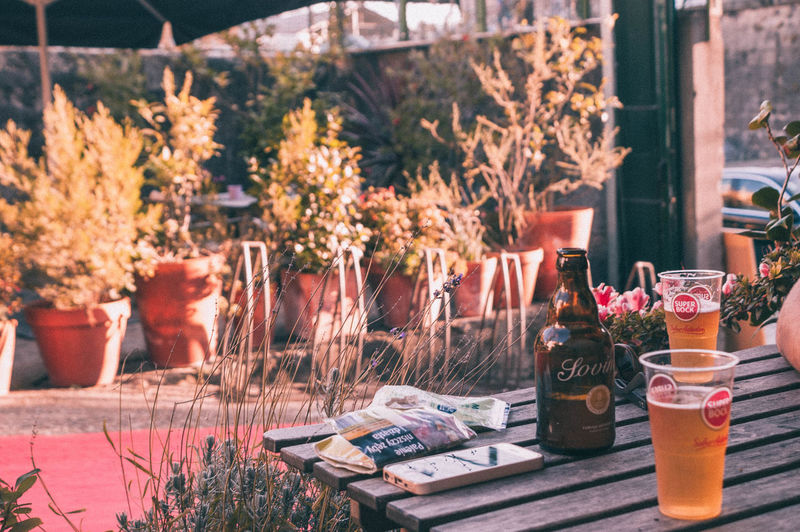 Beer Bottle Close-up Day Flower Focus On Foreground Freshness Garden Growth Indoors  Nature No People Pint Of Beer Plant Potted Plant Table