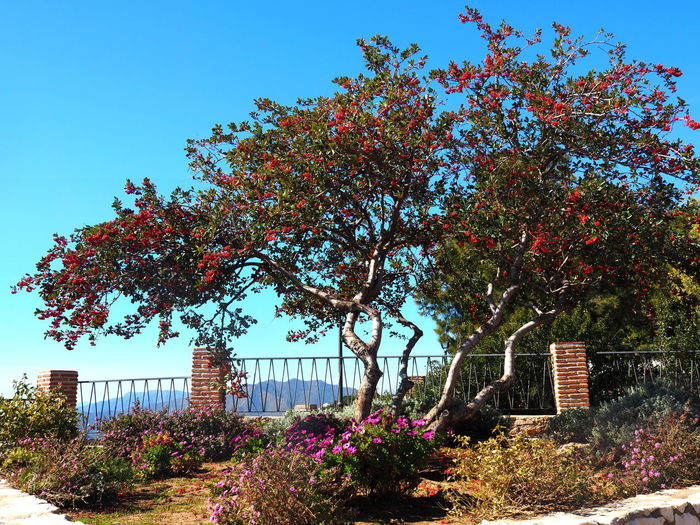 Plant Tree Growth Sky Built Structure Nature Building Exterior Architecture Flower Flowering Plant Clear Sky Day Beauty In Nature No People Sunlight Building Outdoors Freshness Low Angle View Fragility Mijas Pueblo Mijas SPAIN