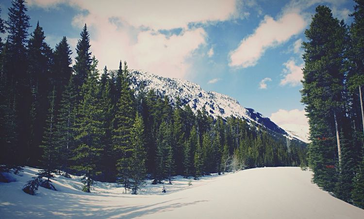Tree Snow Sky Mountain Road Cloud - Sky Canada Waterton May