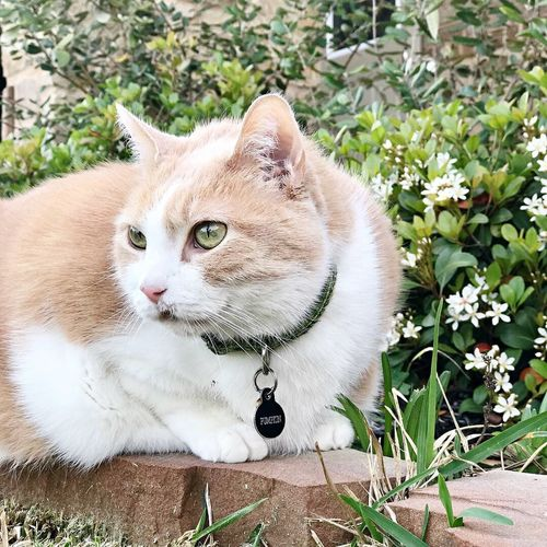 Cat Pets Mammal Domestic Cat Animal Feline Domestic Animals Animal Themes Domestic Vertebrate One Animal Plant No People Portrait Nature Looking At Camera Day Field Whisker Animal Head
