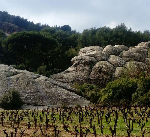 #Nature  #provence #France EyeEmNewHere
