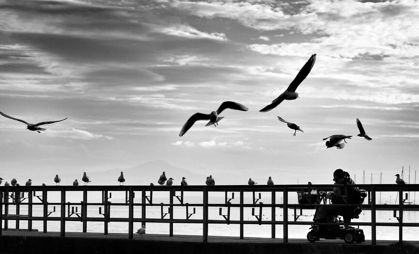 Woman on boardwalk and seagulls