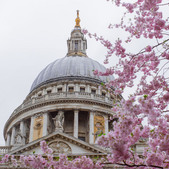 Blossom EyeEm Best Shots Open Edit OpenEdit London Landmark Landmarks Beautiful Beauty In Nature Street City Tree Politics And Government Cherry Blossom Historic Blossom In Bloom History Monument Historic Building