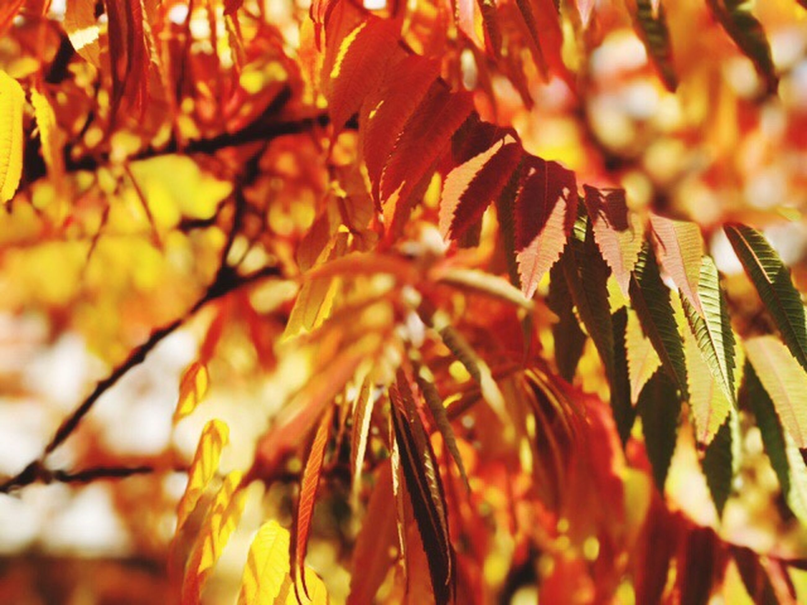 leaf, nature, autumn, growth, beauty in nature, close-up, change, tree, no people, orange color, plant, outdoors, day, leaves, branch, maple leaf, freshness