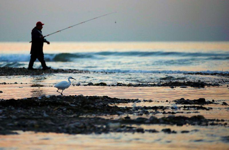 Fisherman Sea Water Vertebrate Beach Bird Fishing Animals In The Wild Land Nature One Person Men Fishing Rod Animal Wildlife Sky Beauty In Nature Rod Real People Horizon Over Water Outdoors Fisherman