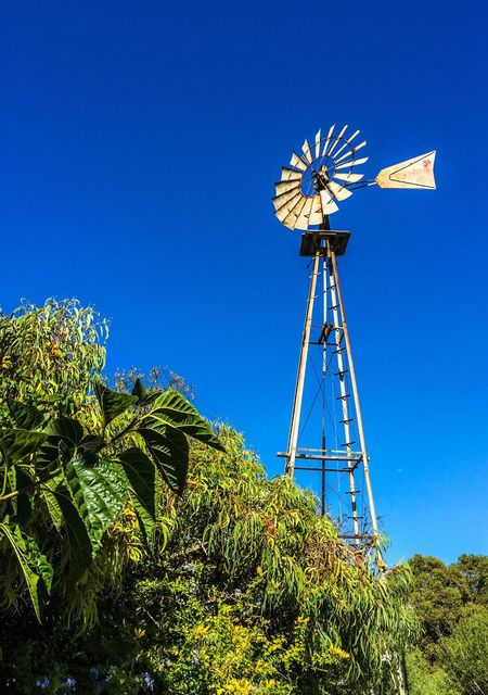 Windmill Towering over Tropical Plants Windmill Metal Towering Sky Plants Tropical Plants Green Leaves Tropical Leaves Old Blades Energy Vanes Mill Rotating Rotational Energy