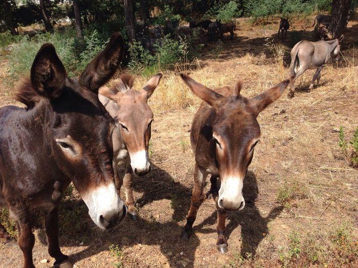 Met some Donkey