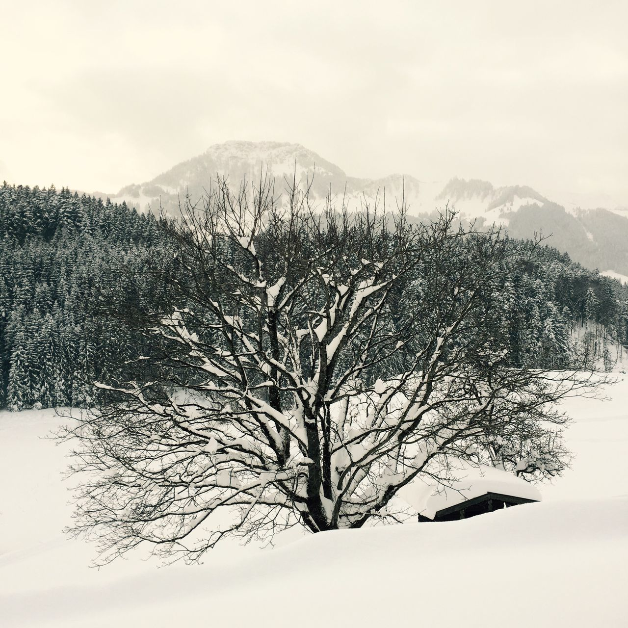 beauty in nature, winter, tranquility, nature, snow, cold temperature, tree, scenics, tranquil scene, mountain, sky, landscape, outdoors, no people, day, bare tree, branch