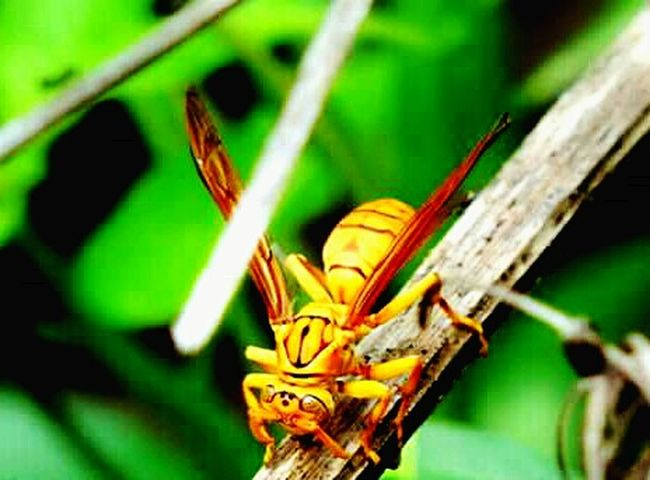 Hiiiii ✌ Hello World Taking Photos Relaxing Hanging Out Insect Macro  Insect Photography BestEyeemShots Insect_perfection Colorful Insects