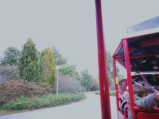 Withe Sky Clear Sky Tree Diminishing Perspective The Way Forward Tourism Little Train Red Trees Outdoors HuaweiP9plus No Edit/no Filter Childhood 30 Friends Big Children Time To Eat. Transportation Slow Life FunnyMoments