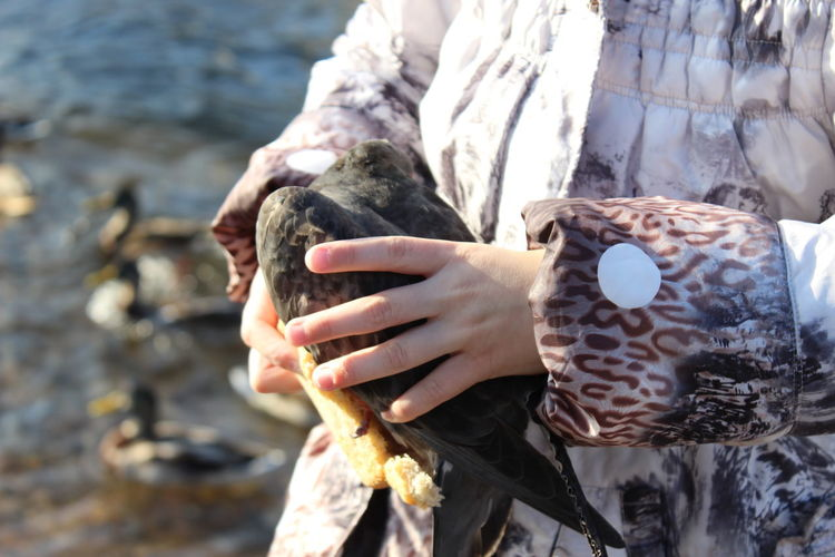 Cropped image of woman holding bird