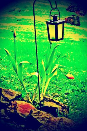 Does everything look brighter in the Spring? Hdr_Collection Fire Tulips Spring 2016 Emotional Therapy IPhoneography Noedit #nofilter #notneeded From My Garden Spring Rain Natures Canvas My Emotional Therapy