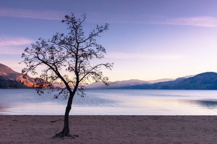 Leafless tree silhouetted against sunset sky, mountains, lake, and beach in autumn Alone Autumn Beautiful British Columbia, Canada Calm October Okanagan Valley Silhouette Skaha Lake South Okanagan Tranquil Travel Tree Beach Lake Landscape Mountains Nature Peaceful Season  Sky Sunset Tourism Violet Water