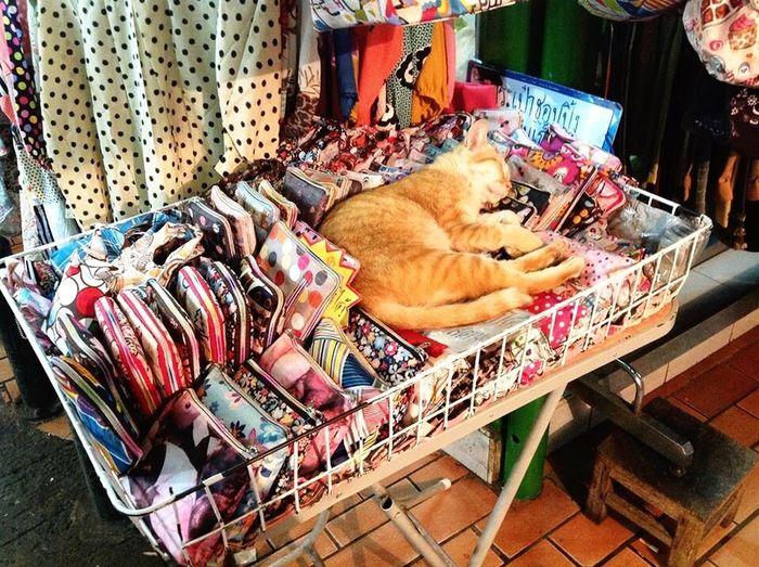 Freelance Life Capturing Freedom Cat Carefree Windowshopping Bed