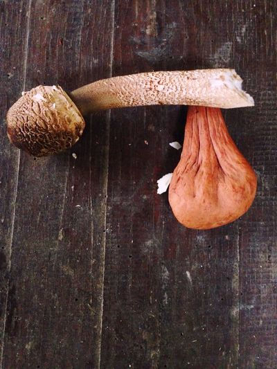 Macrolepiota procera X Clavariadelphus pistillaris. Great collaboration Collaboration Getting Creative Forest Photography Nature Eyeem Mushrooms Fungi Mushroom Mushrooms Mushroom_pictures Forest Freshness Food Food And Drink Still Life Wood - Material Wellbeing The Creative - 2018 EyeEm Awards Table Indoors  No People Vegetable Brown Close-up Fungus Two Objects