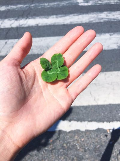 Close-up of human hand holding leaves on road during sunny day