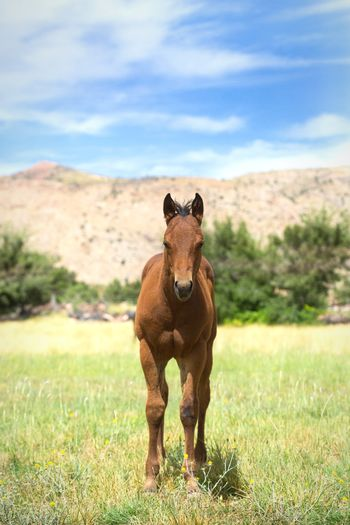 foal in field Horse Field Farm Equine Young Animal Brown Green Grass Quarter Horse Baby Horse Horse Photography  Horses Rural Cute Animals Baby Animals Cute Full Length Sky Grass
