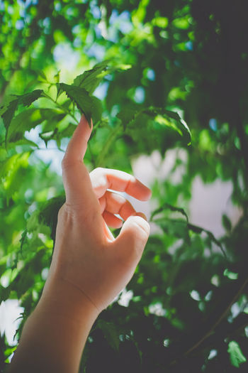 Green in life. Body Part Day Finger Focus On Foreground Green Color Hand Holding Human Body Part Human Hand Human Limb Leaf Lifestyles Nature One Person Outdoors Personal Perspective Plant Plant Part Real People Tree Unrecognizable Person The Still Life Photographer - 2018 EyeEm Awards The Great Outdoors - 2018 EyeEm Awards