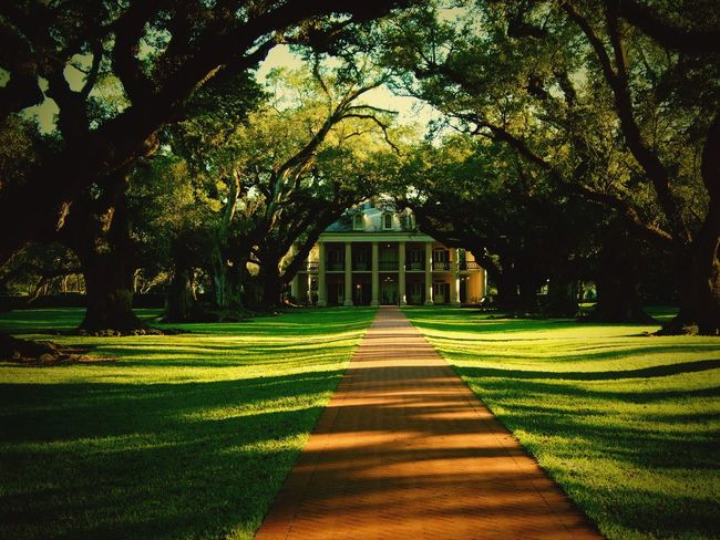 Oak Trees Oak Alley Oak Alley Plantation Louisiana