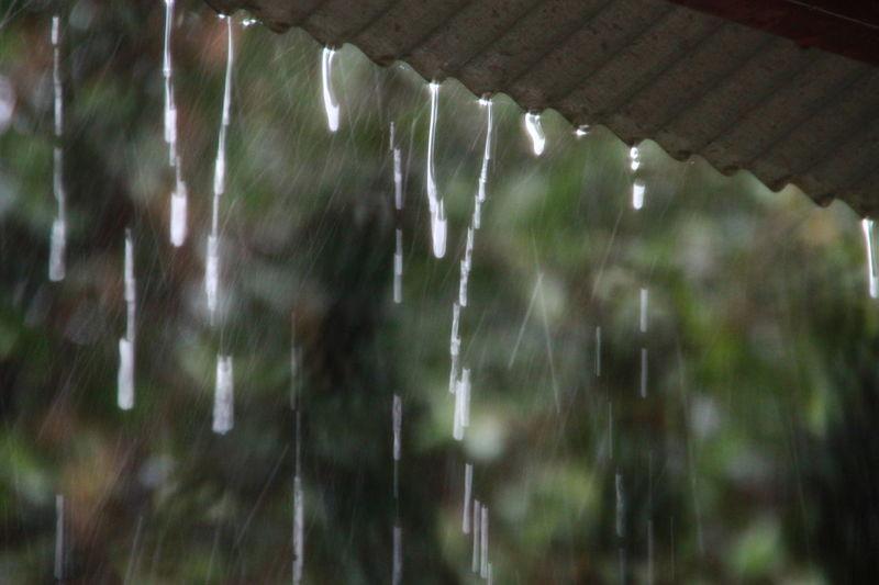 Rain season. Nature Tree No People RainDrop Water Season  Weather Environment Rain Roof Rainy Day Raining Day Season Change Close-up Blur Background Abstract Wet Cool Rainy Rainy Season Raindropshot Beauty In Nature