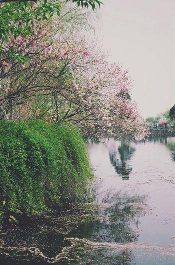 Flowers Flowerporn Flower spring,浣花溪