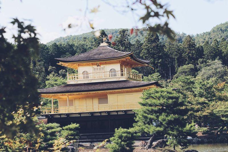 Golden pavilion Japanese Temple Japan Kyoto Golden Pavilion  Architecture Built Structure Plant Building Exterior Tree Building Nature Religion Place Of Worship Spirituality Shrine