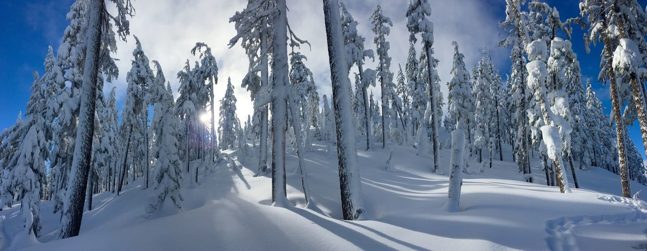 Whoville Winter Wonderland Oregon PNW PNWonderland Winter Snow Cold Temperature Tree Plant Beauty In Nature Nature Forest Frozen Tranquility WoodLand