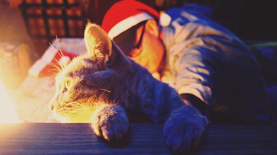 Cat MerryChristmas 20151225