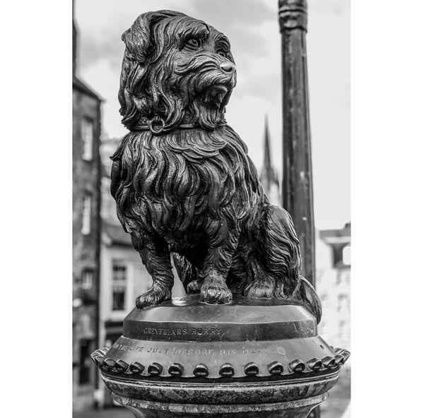 Dog Greyfriars Bobby Scotland Edinburgh Nikon Nikonphotography D750 Street Streetphotography Window Statue Close-up