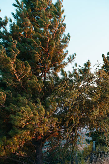 Plant Growth Tree Sky Nature No People Low Angle View Beauty In Nature Day Tranquility Outdoors Branch Clear Sky Green Color Autumn Water Sunlight Close-up Land Coniferous Tree