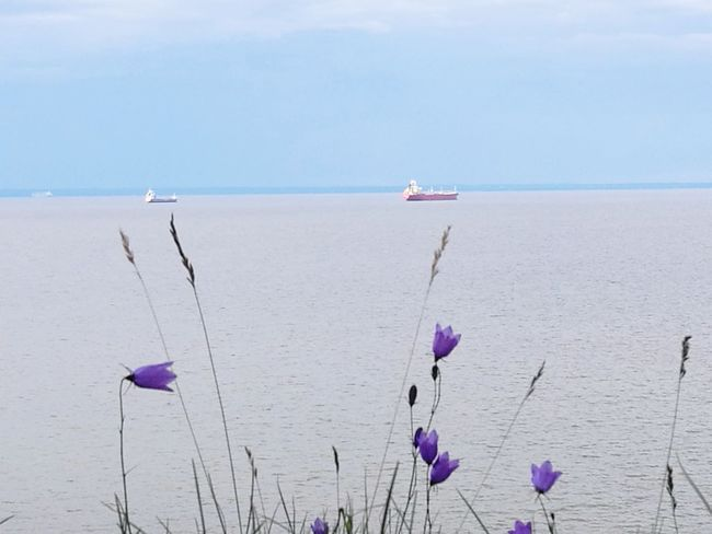 Sea Flower Nature Water Outdoors Landscape Tranquility No People Beauty In Nature Day Horizon Over Water Summer Blue Sky Ships
