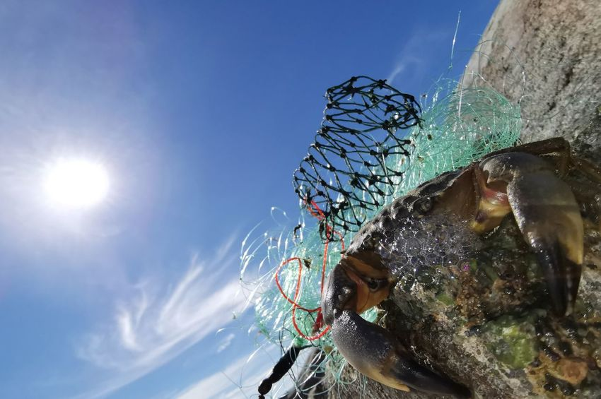 Crab on a stone with sunrise and beautiful blue sky Water Sun Blue Sunlight UnderSea Sky Close-up Spider Web Amusement Park Ride Carousel Refraction Spider