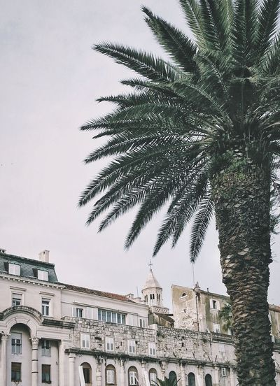City No People Tree Architecture Sky Outdoors Cityscape Day Palm Tree Travel Destinations Split Croatia Split Croatia Miles Away
