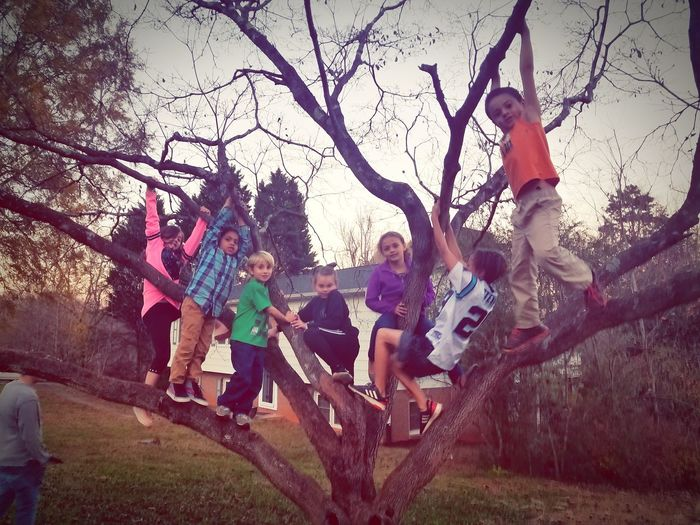 All my lil Neeps hanging out with my Daughter in a Tree Kids Being Kids Kids Having Fun Kids Being Kids Kids Hanging Out Kids Climbing Tree Full Length Togetherness Sky Friend Growing Medium Group Of People
