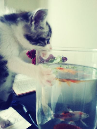 Kitty Wants To Eat The Fish