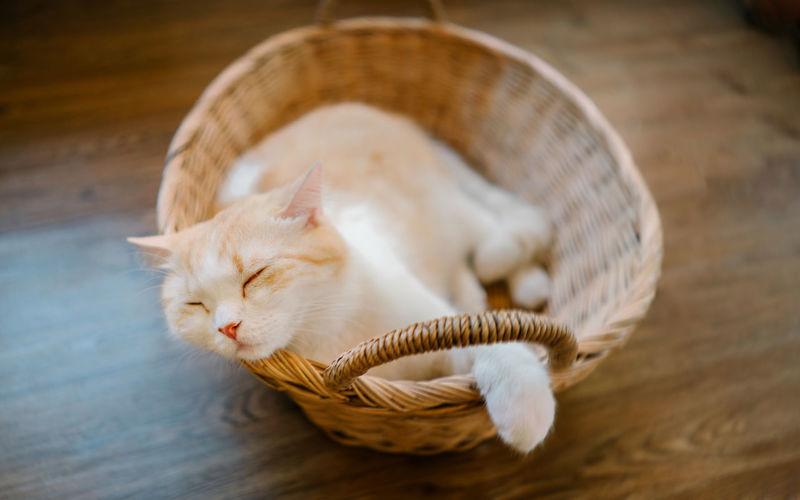 Cat resting in basket