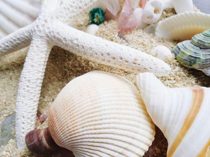 Natural absoluta EyeEm Selects Quality Sea Life Close-up Stall Fish Market