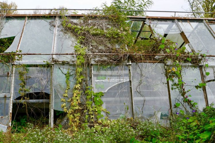 Abandoned building by plants