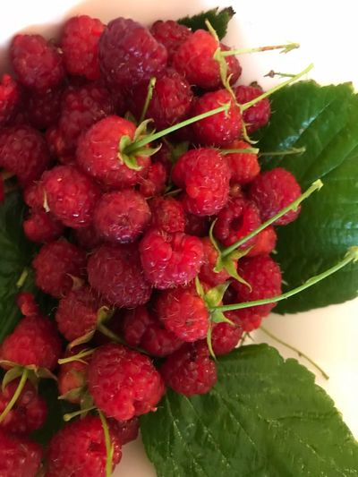 Immer noch Himbeeren zu ernten Obst Picoftheday Himbeeren Healthy Eating Fruit Red Food And Drink Berry Fruit Food Freshness Leaf Raspberry Still Life Close-up No People Nature Wellbeing High Angle View Ripe Strawberry Plant Part Indoors  Green Color