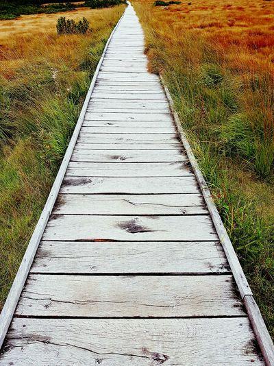 Boardwalk leading towards landscape