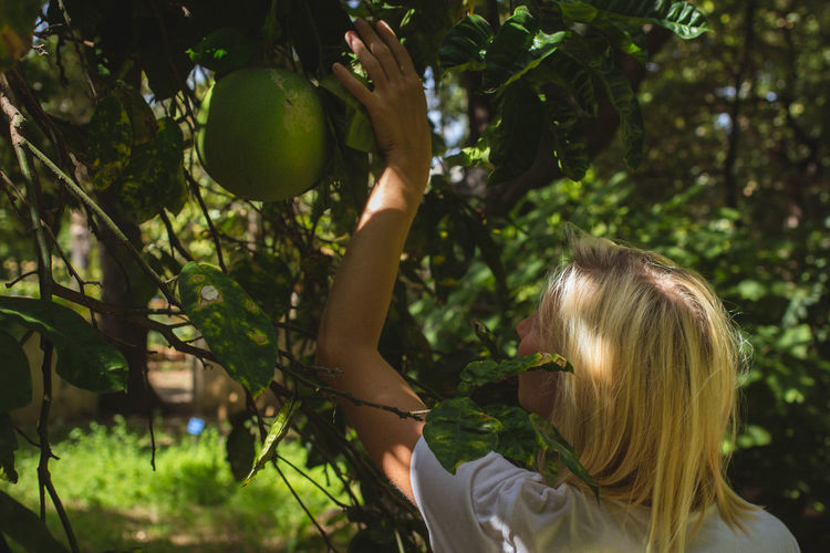 Rear view of woman with blond hair plucking grapefruit at back yard