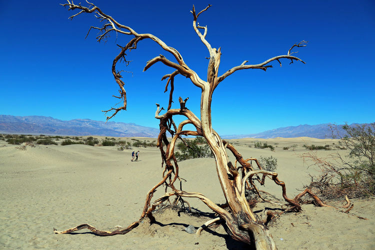 Death Valley, California Death Valley National Park California Death Valley USA Arid Climate Bare Tree Beauty In Nature Blue Branch Clear Sky Day Dead Plant Dead Tree Desert Landscape Mountain Mountain Range Nature No People Non-urban Scene Outdoors Scenics Sky Tranquil Scene Tranquility Tree