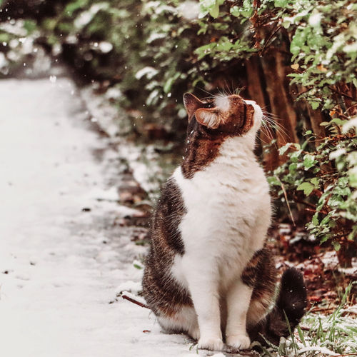 Cat watching the snow falling