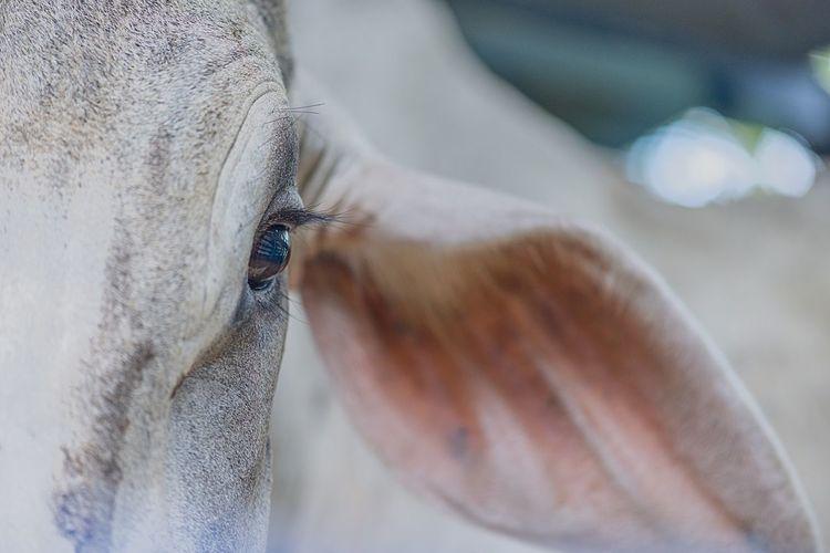 Este Naturaleza Animal Nature Naruraleza Nature Vaca Eye Ojo Close-up One Person Insect Animal Wildlife Invertebrate Human Body Part Selective Focus Animals In The Wild Day Nature One Animal Body Part