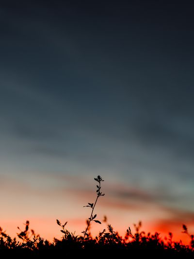 Low angle view of silhouette plants against sky at sunset