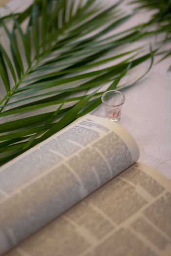 bible and palm